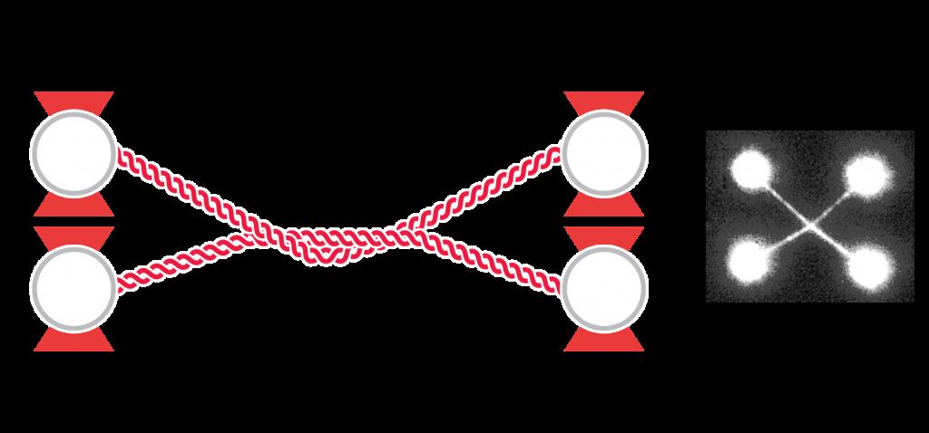 Intercalated DNA