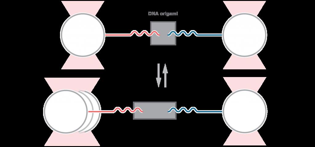 Brochures Optical tweezers-fluorescence microscopy acoustic force spectroscopy