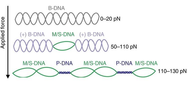optical-tweezers-fluorescence-microscopy-Nature-Communications