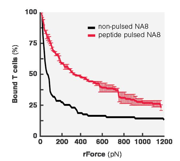 Avidity Curve Na8 Peptide Pulsing QM
