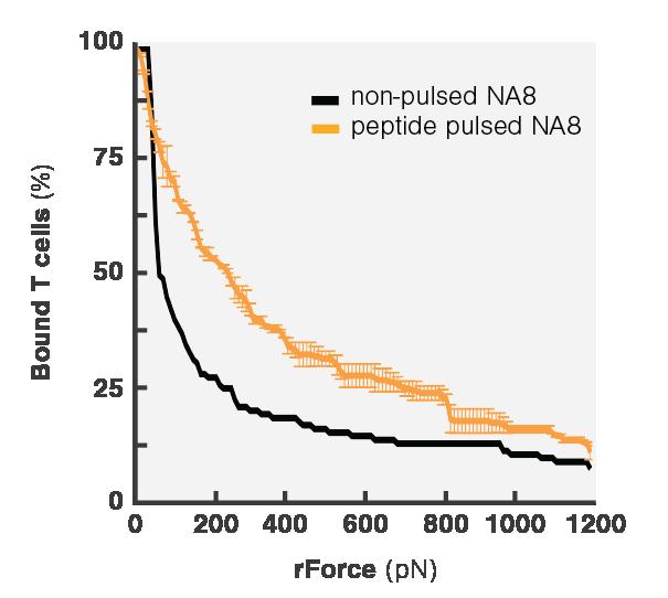 Avidity Curve Na8 Peptide Pulsing WT