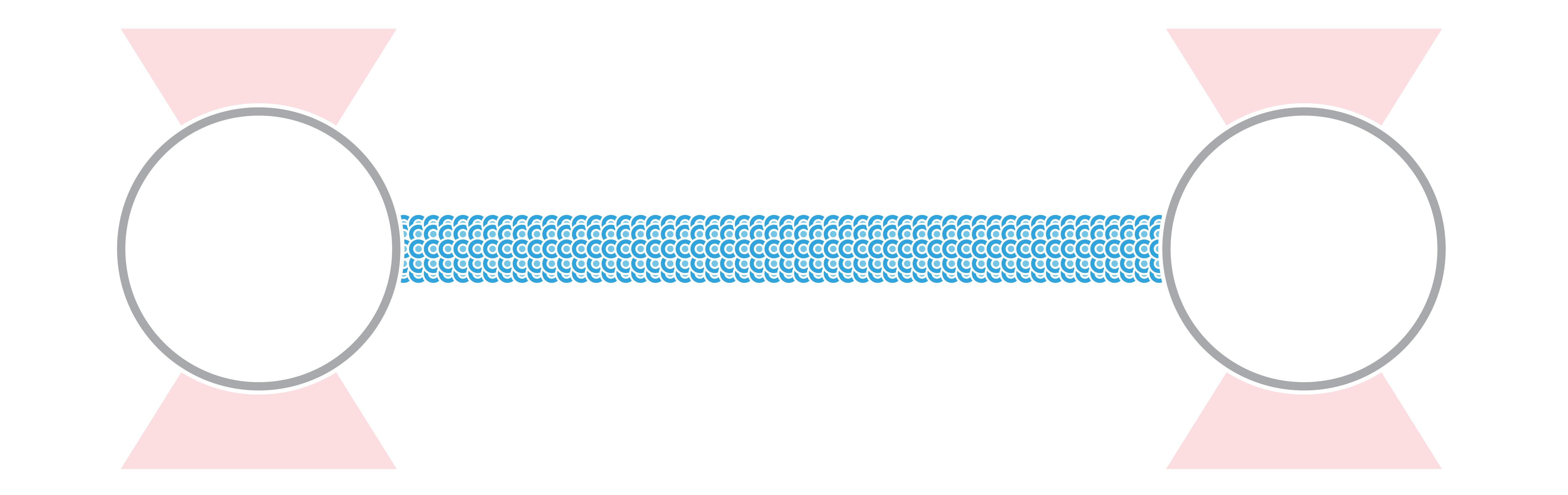 C Trap Cytoskeletal Transport Vimentin Filament