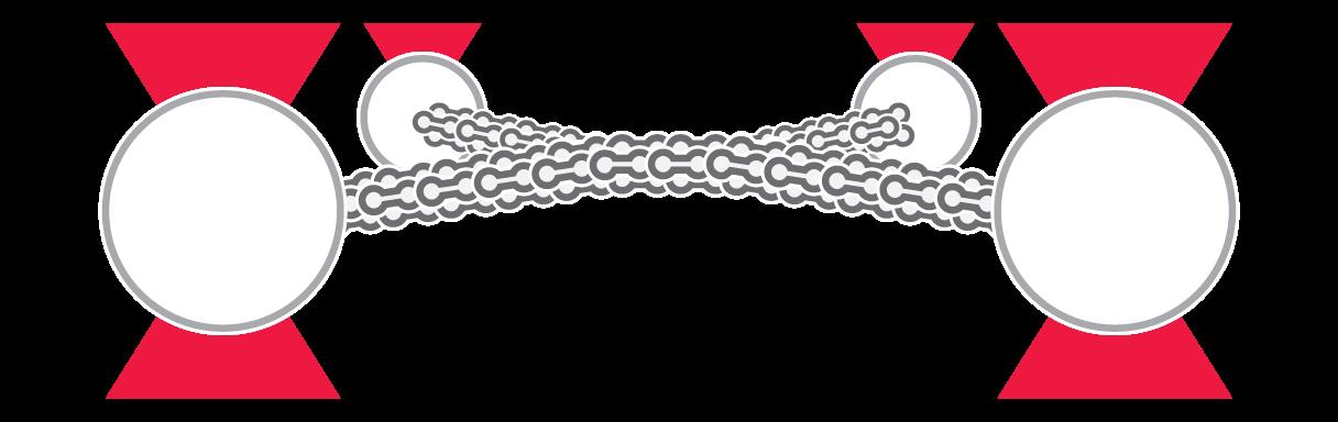 C Trap Filament Filament Interactions