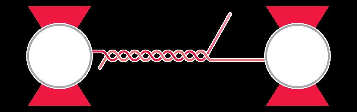 C-Trap RNA Mechanics