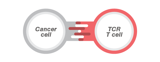 TCR T CELLS