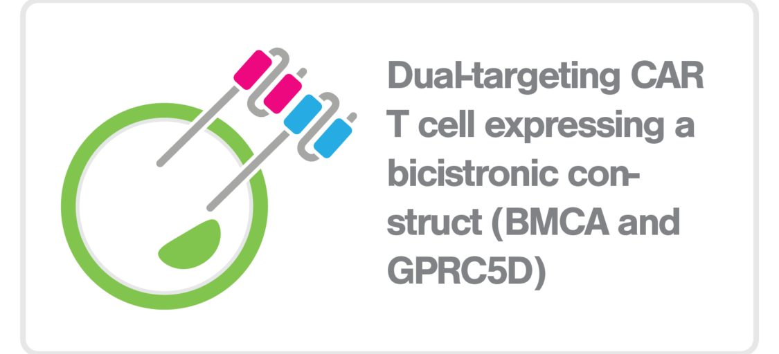 zMovi_CART_dual targeting BCMA GPRC5D CAR T cell_bicistronic construct