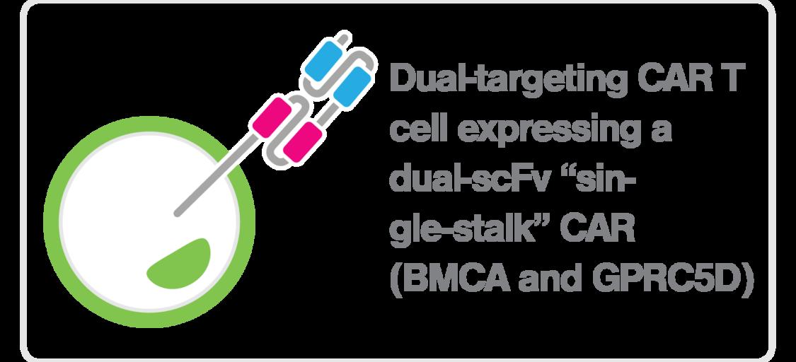 zMovi_CART_dual targeting BCMA GPRC5D CAR T cell_single stalk