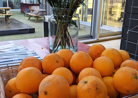 LUMICKS oranges from adopted tree